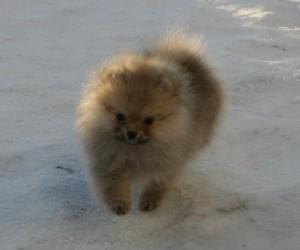 Lulu i snøen