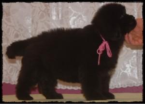 pink-girl-k-litter-147a-til