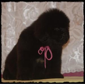 pink-girl-k-litter-210a-til