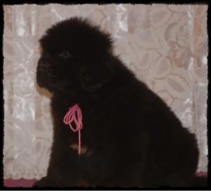 pink-girl-k-litter-224a-til