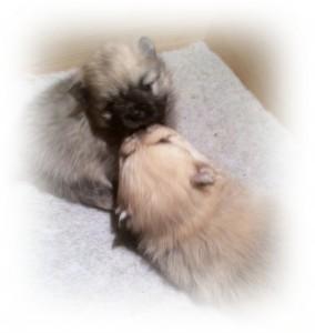 Lulu barn søsken kjærlighet-tile