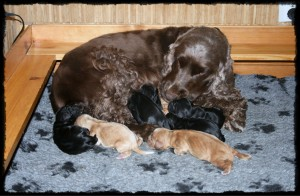 Mia med nyfødte valper k-kull-tile