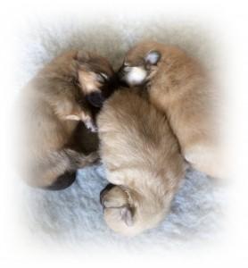 leona sine tre-tile