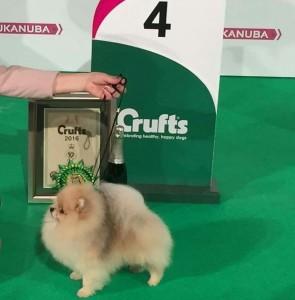 Crufts winner Bernt